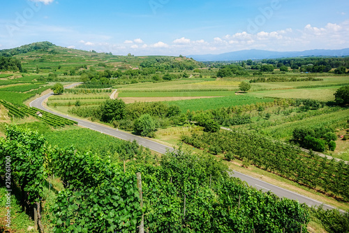 vineyard scenery at Ihringen Kaiserstuhl Germany - 216261000