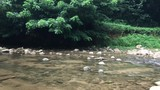Footage of stream water with rapids with jungle with trees leaning over fast Magical scenery of rainforest and river with rocks. Wild in Thailand. with real sound. - 216261201