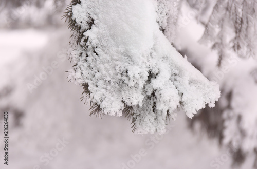 Snowcowered branches. Winter blur background. Frost trees.