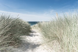 Dune with green grass. View for the beach. - 216272023