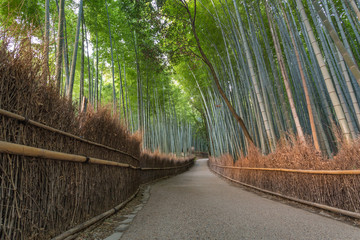 Arashiyama Path © Richard