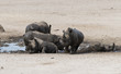 Quadro group of hippo animals