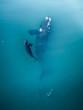 Quadro Australia - Whales 02