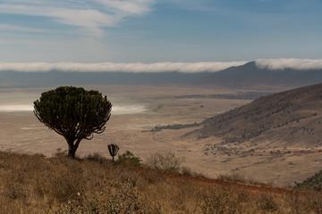 Ngorogoro-Krater - Savanne - Tansania