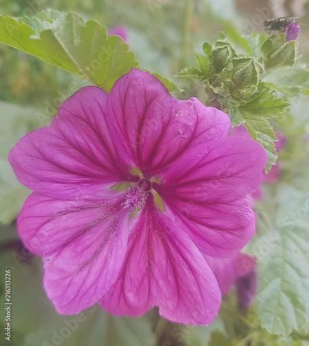 Blumen, Blüten, Sommer, Natur