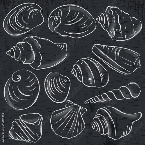 Set różni typ milczkowie i skorupy na blackboard tle, wektorowa ilustracja.