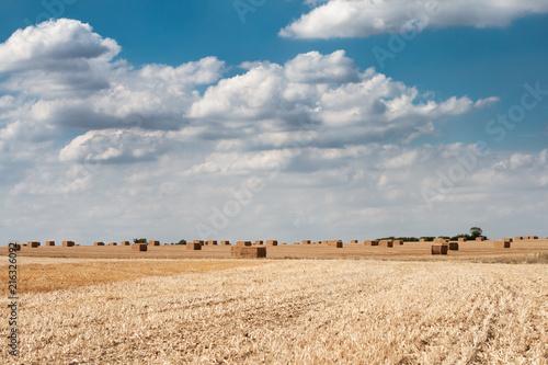 Fotobehang Beige fields around sawbridgeworth