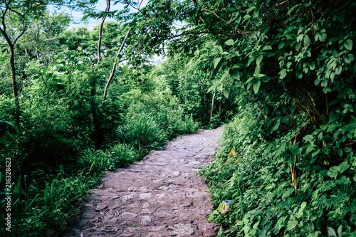 Fotobehang Weg in bos Sendero