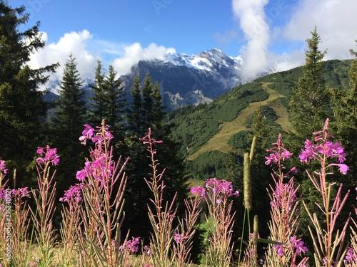 Foto Spatwand Zwart flowers