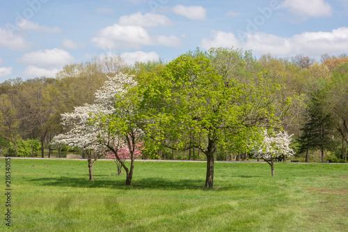 Canvas Lente Springtime in Missouri