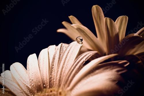 Foto Spatwand Gerbera Flower