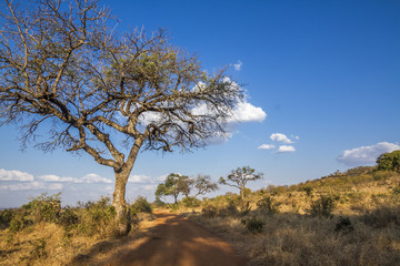 Dirt road safari in Punda Maria , Kruger National park, South Africa © UTOPIA