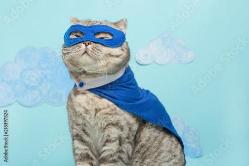 Leinwandbild Motiv superhero cat, Scottish Whiskas with a blue cloak and mask. The concept of a superhero, super cat, leader