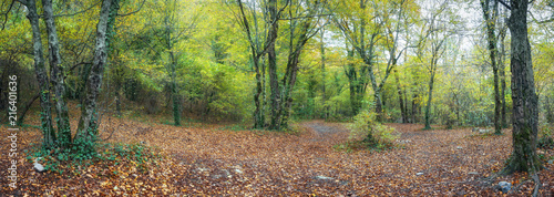 Canvas Cappuccino Осенний лес на Кавказе,Краснодарский край, Россияя