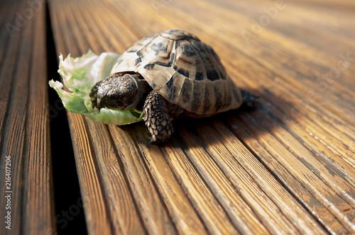 Foto Spatwand Schildpad Schildkröte Turtle