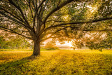 Autumn sunset in Parsippany, New Jersey, on the shore of Parsippany lake. Sun Rays burst through a large tree canopy. - 216416015