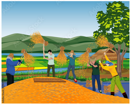 farmer work in paddy field vector design - 216417443