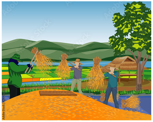 farmer work in paddy field vector design - 216419220