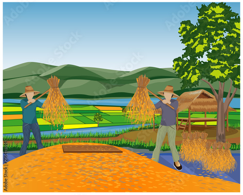 farmer work in paddy field vector design - 216419844