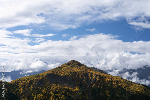 Mountain top and autumn forest