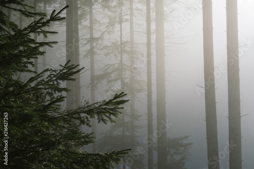 Autumn landscape in the fir forest with beautiful light