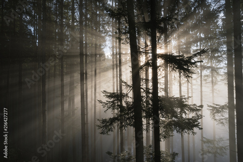 Rays of the sun in a misty forest