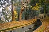 秋の京都の森の中を流れる琵琶湖疎水