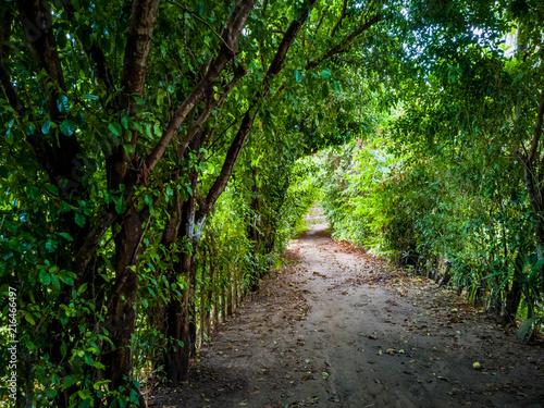 Fotobehang Weg in bos Fotografía