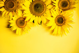 Beautiful sunflowers on yellow background. Yellow flower. Holiday harvest concept - 216471212