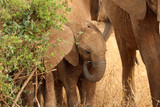 A baby elephant with its mother in Tanzania