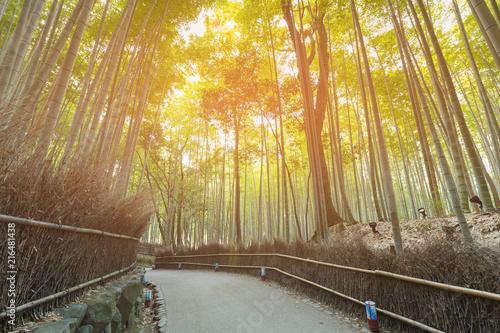 Canvas Bamboe Bamboo forest Arashiyama Kyoto, natural landscape background