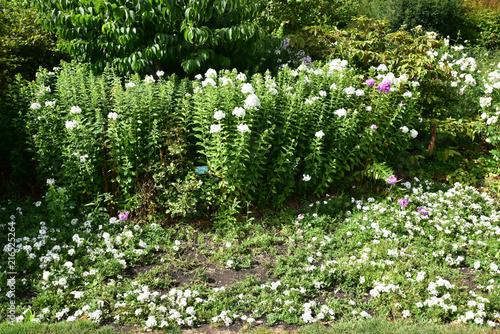 Foto Murales Jardin de fleurs blanches