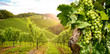 Leinwanddruck Bild - Vineyards with grapevine and winery along wine road in the evening sun, Austria Europe