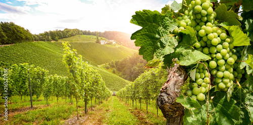Leinwanddruck Bild Vineyards with grapevine and winery along wine road in the evening sun, Austria Europe