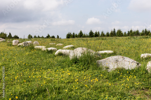 Foto Murales Big stones in a row on the meadow