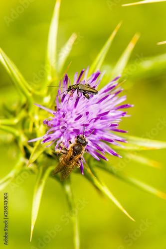 In de dag Bee Bee on flower