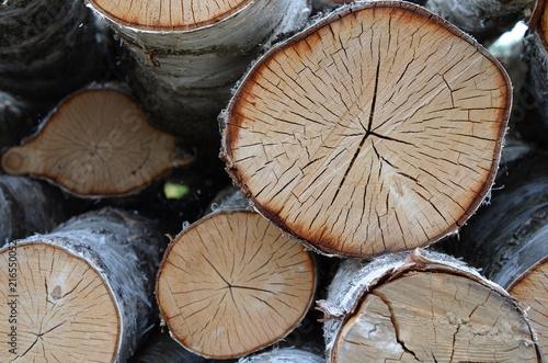 Brzoza (Betula) - ścięte drzewa, kłody - 216550052