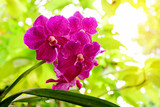 Beautiful orchids blooming in garden