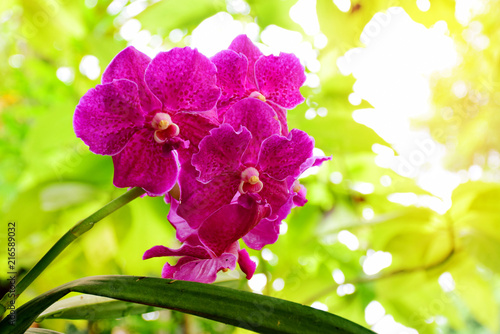Beautiful orchids blooming in garden - 216589032