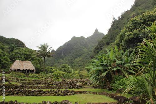 Plexiglas Khaki Kauai