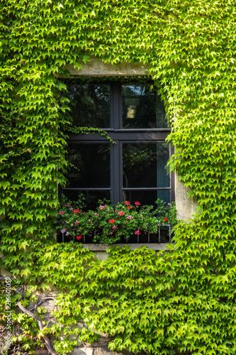 Foto Murales Fassadenbegrünung mit Fenster