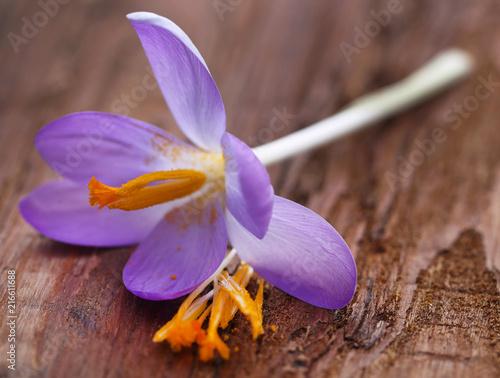 Leinwanddruck Bild Saffron crocus flower