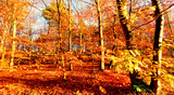 Beauty of autumn / wonderful fall colors in the forest :) - 216612480
