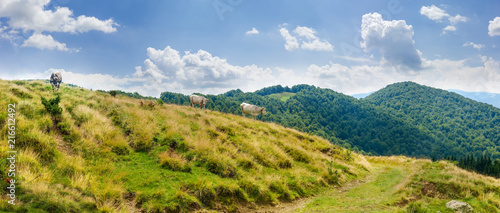 Mountain landscape with cows on pasture in the Carpathian Mountains