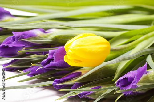 Canvas Iris тюльпаны весенние и цветы ирис в букете