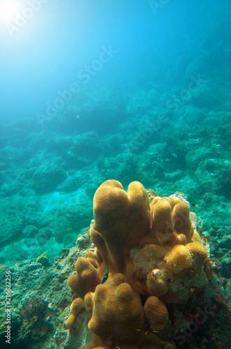 Foto Murales Underwater Coral