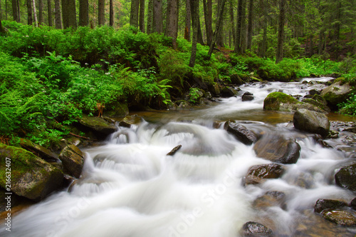 Foto Spatwand Bergrivier River in the woods
