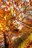 Beauty of autumn / wonderful fall colors in the forest :) - 216646629