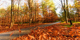 Beauty of autumn / wonderful fall colors in the forest :) - 216650696