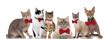 Leinwandbild Motiv six gentleman cats standing, sitting and lying on white background